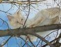 Butters in his fav outdoor tree
