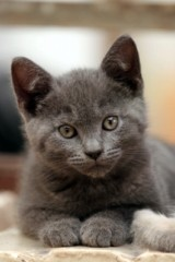 pictures-of-cats