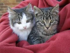 cat34.jpg