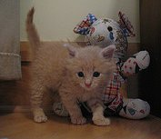 kitten with stuffed animal