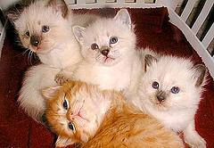 <i>group of kittens