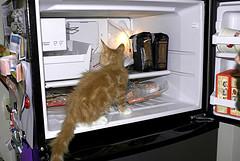 kitten in freezer