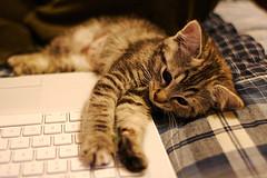 kitten on a computer