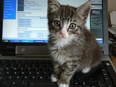 kitten on keyboard