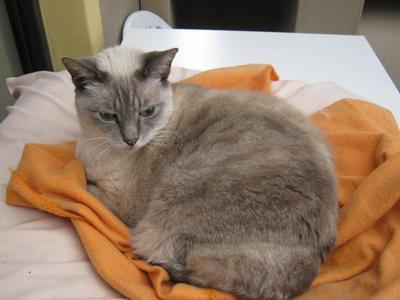 Snowflake loves her orange fluffy blanket