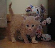 kitten with stuffed animal