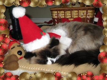 Prissy photoshoot from Christmas  2009.