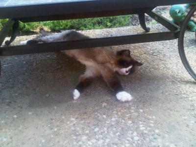 Prissy naps under the patio firepit